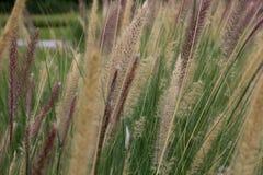 Fiore e luce solare dell'erba Fotografie Stock Libere da Diritti