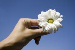 Fiore e mano contro cielo blu Fotografie Stock Libere da Diritti