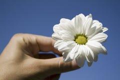 Fiore e mano contro cielo blu Fotografia Stock Libera da Diritti