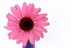 Fiore e merletto del cono Fotografia Stock Libera da Diritti