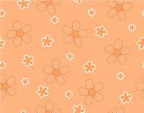 Fiore e mini fiore di dimensione su arancione-chiaro Fotografia Stock