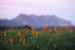Fiore e montagna Immagine Stock