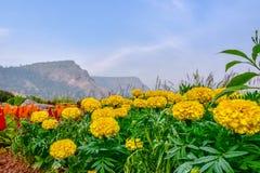 Fiore e montagna Fotografie Stock