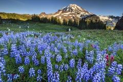 Fiore e montagne Immagini Stock
