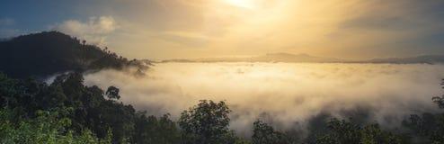 Fiore e nebbia di mattina Fotografie Stock Libere da Diritti