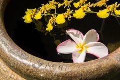 Fiore e oncidium di Plumerai su acqua Fotografia Stock