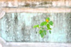 Fiore e parete di pietra Immagini Stock