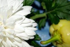 Fiore e pepe Fotografie Stock