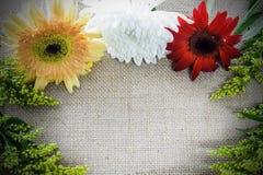 Fiore e pianta su fondo marrone Fotografia Stock