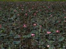 Fiore e piante di Lotus Fotografia Stock Libera da Diritti