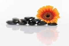 Fiore e pietre Immagine Stock