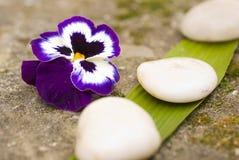 Fiore e pietre di zen Immagine Stock
