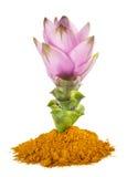 Fiore e polvere della curcuma Fotografie Stock