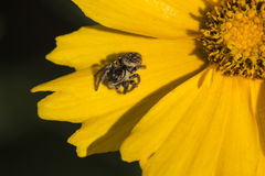 Fiore e ragno Immagini Stock Libere da Diritti