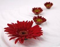 Fiore e sale del mare Immagini Stock Libere da Diritti