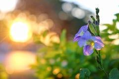 Fiore e sole Fotografie Stock Libere da Diritti