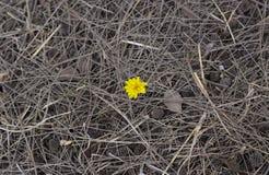 fiore e sporcizia Fotografie Stock Libere da Diritti