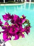 Fiore e stagno porpora fotografie stock libere da diritti