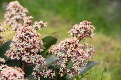 Fiore e un'ape Immagini Stock