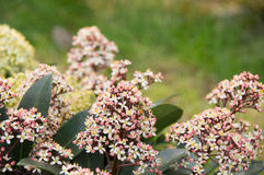 Fiore e un'ape Fotografia Stock