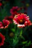 Fiore ed ape immagini stock