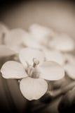 Fiore ed erba verde in giardino Fotografia Stock