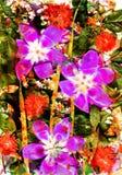 Fiore ed estratto ed estate e quadrato Immagini Stock