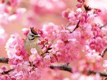 Fiore ed uccello Fotografia Stock