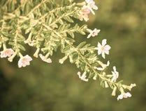 Fiore elaborato negli sguardi d'annata fotografia stock