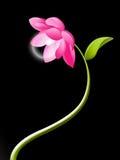 Fiore elettrico del loto Fotografia Stock Libera da Diritti