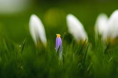 Fiore in erba immagini stock