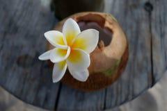 Fiore esotico bianco sul cocktail della noce di cocco Fotografie Stock