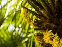 Fiore esotico dell'albero Fotografie Stock Libere da Diritti