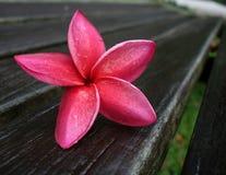 Fiore esotico rosa su legno Immagini Stock Libere da Diritti