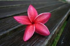Fiore esotico rosa su legno Immagine Stock
