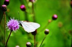 Fiore, farfalla e formica Immagine Stock Libera da Diritti