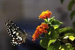 Fiore, farfalla, verde di estate, bello Fotografia Stock