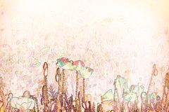 Fiore fatto con le tecniche dell'acquerello - illustrazione del papavero Fotografie Stock Libere da Diritti