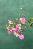 Fiore felice di estate della sorgente Fotografie Stock