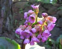 Fiore Fiore rosa immagine stock