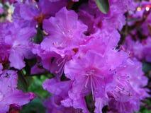 Fiore Fiore rosa Fotografia Stock