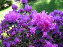 Fiore Fiore rosa immagini stock libere da diritti