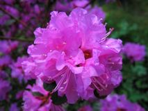 Fiore Fiore rosa fotografie stock