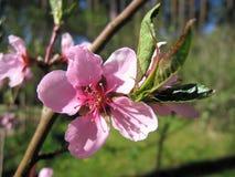 Fiore Fiore rosa immagini stock