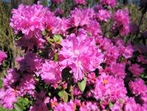 Fiore Fiore rosa fotografia stock libera da diritti