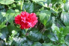 Fiore, fiore rosso Fotografie Stock