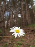 Fiore in foresta immagini stock