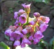 Fiore Foto contenuta il mio giardino fotografia stock