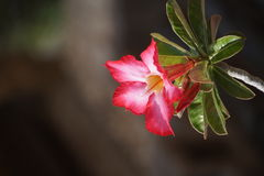 Fiore fragile Fotografia Stock