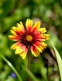 Fiore freddo Immagini Stock
